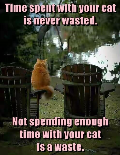 Photo caption - Time spent with your cat is never wasted. Not spending enough time with your cat is a waste.