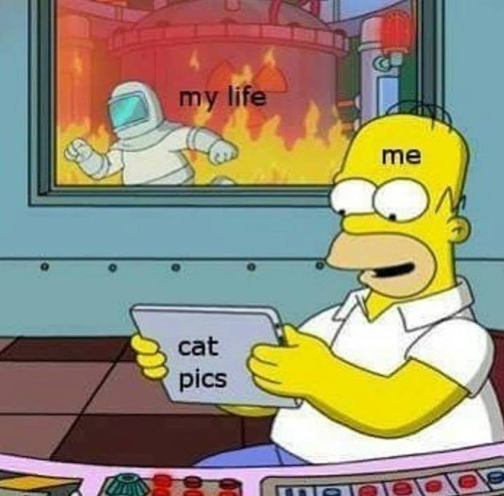 "cartoon animation homer simpson labeled as ""me"" looking at a tablet labeled as ""cat pics"" while a fire is raging in the nuclear plant representing my life going up in flames"