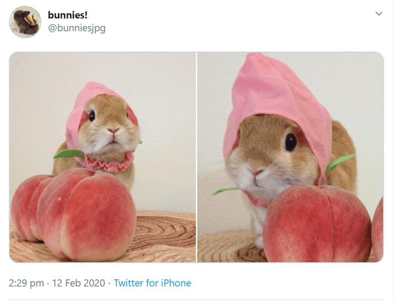 Hamster - bunnies! @bunniesjpg 2:29 pm · 12 Feb 2020 · Twitter for iPhone %.