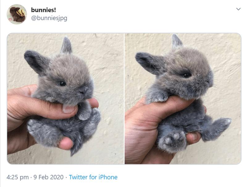 Rabbit - bunnies! @bunniesjpg 4:25 pm · 9 Feb 2020 · Twitter for iPhone