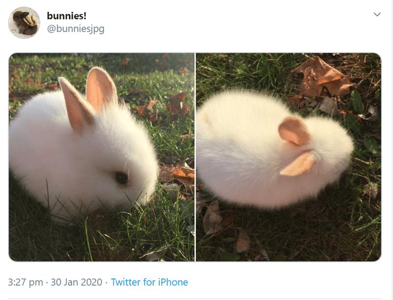 Rabbit - bunnies! @bunniesjpg 3:27 pm · 30 Jan 2020 · Twitter for iPhone