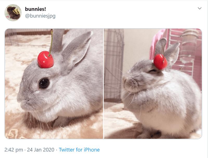 Rabbit - bunnies! @bunniesjpg 2:42 pm · 24 Jan 2020 · Twitter for iPhone