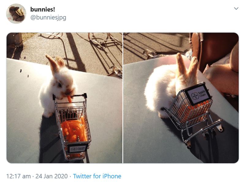 Photography - bunnies! @bunniesjpg Supply Chain 12:17 am · 24 Jan 2020 · Twitter for iPhone