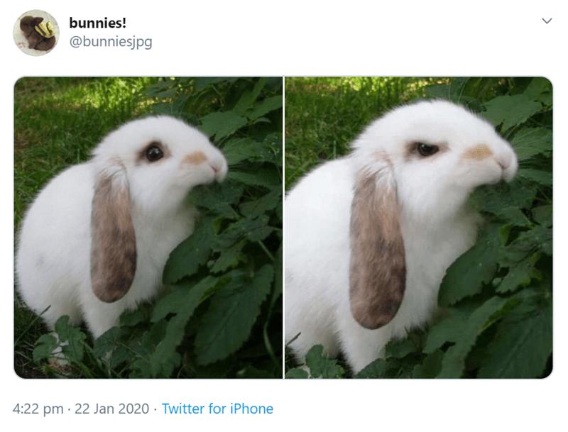 Vertebrate - bunnies! @bunniesjpg 4:22 pm · 22 Jan 2020 · Twitter for iPhone