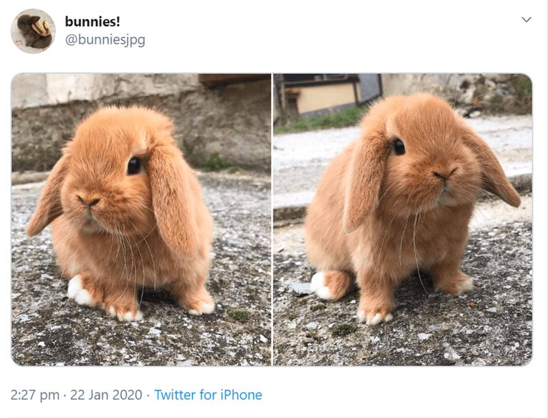Mammal - bunnies! @bunniesjpg 2:27 pm · 22 Jan 2020 · Twitter for iPhone