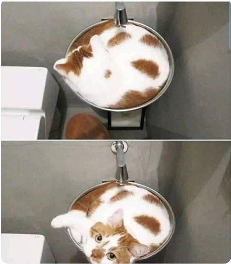 Cat - Cappuccino