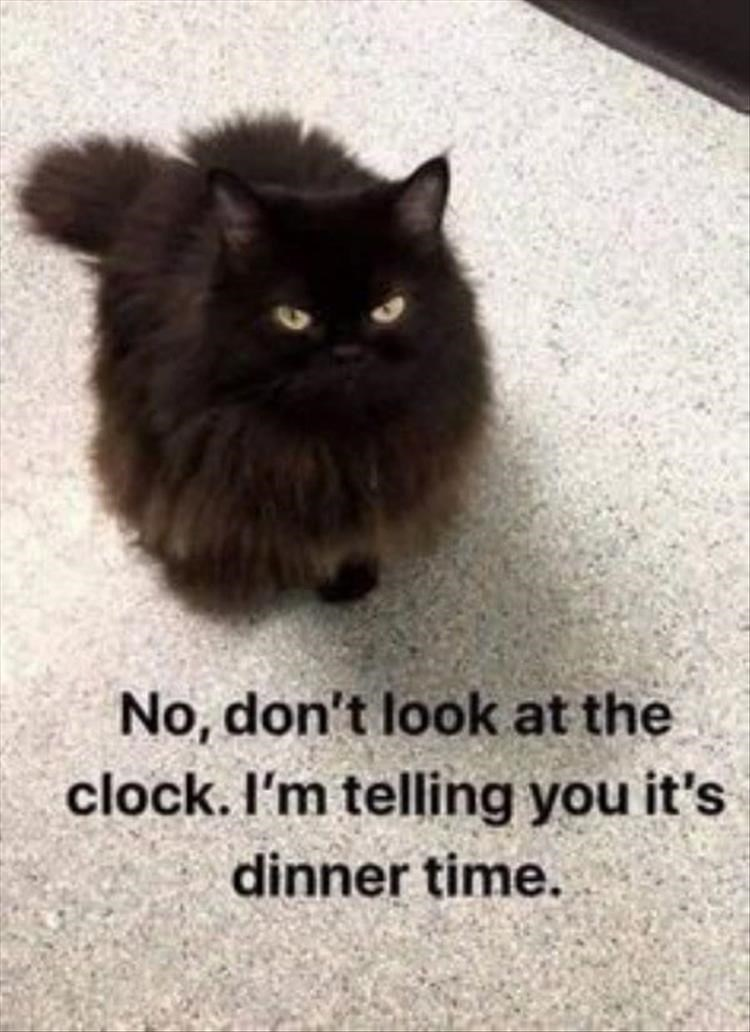 Cat - No, don't look at the clock. I'm telling you it's dinner time.