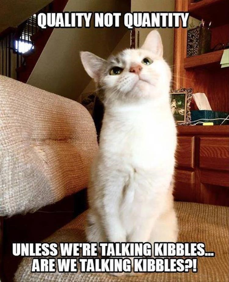 Cat - QUALITY NOT QUANTITY UNLESS WE'RE TALKING KIBBLES. ARE WE TALKING KIBBLES?!