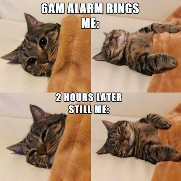 Cat - GAM ALARM RINGS ME: 2 HOURS LATER STILL ME: