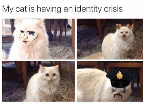 Cat - My cat is having an identity crisis