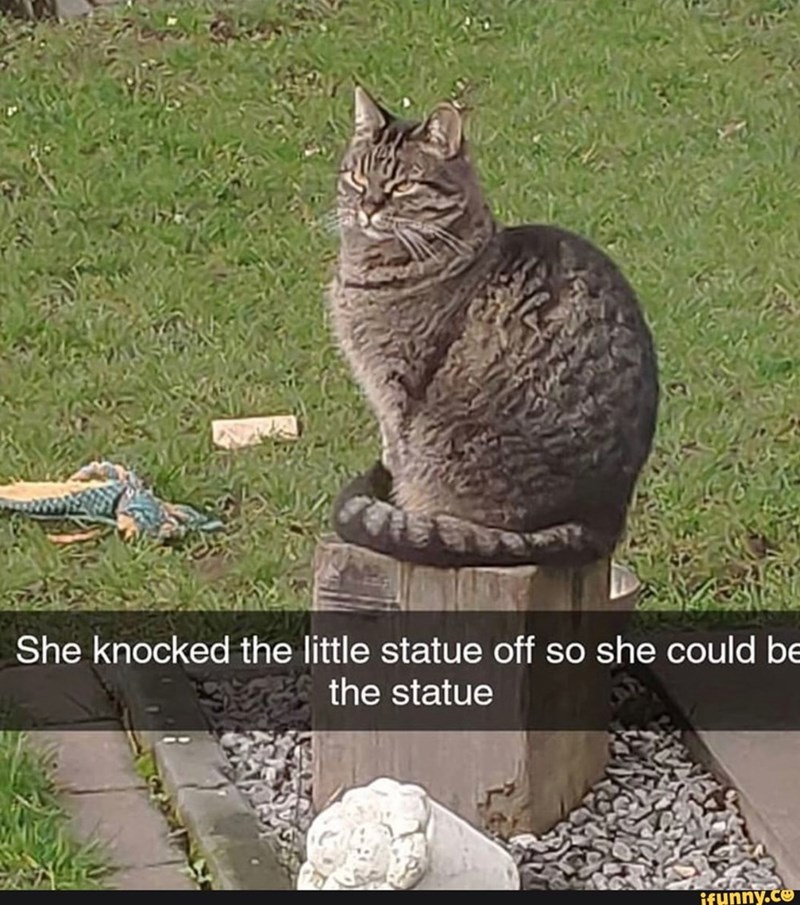 Cat - She knocked the little statue off so she could be the statue ifunny.co