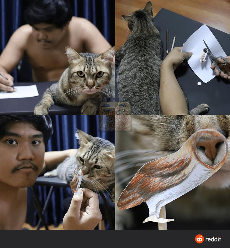 Cat - reddit