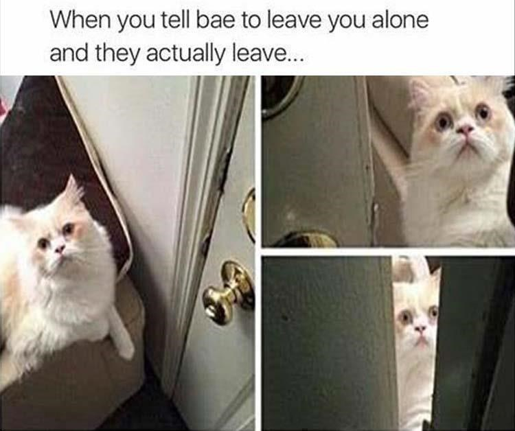 Cat - When you tell bae to leave you alone and they actually leave...