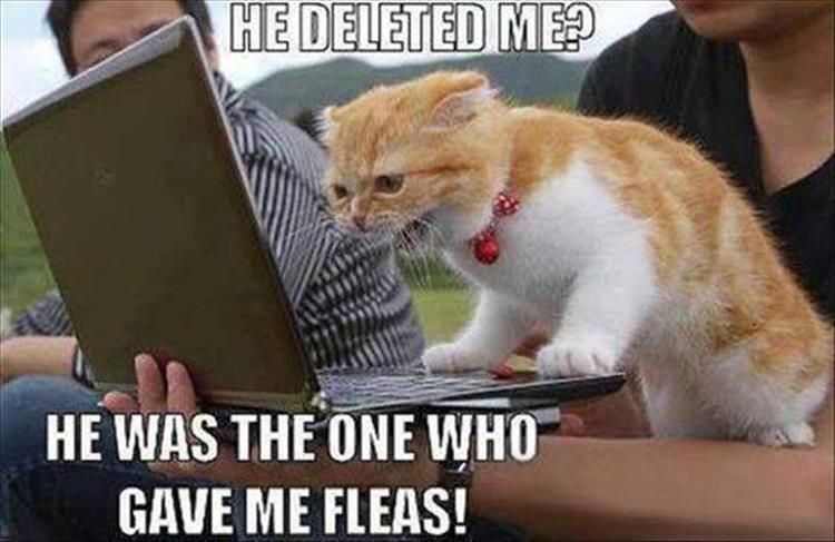 Cat - HE DELETED ME? HE WAS THE ONE WHO GAVE ME FLEAS!
