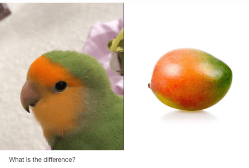 Lovebird - What is the difference?