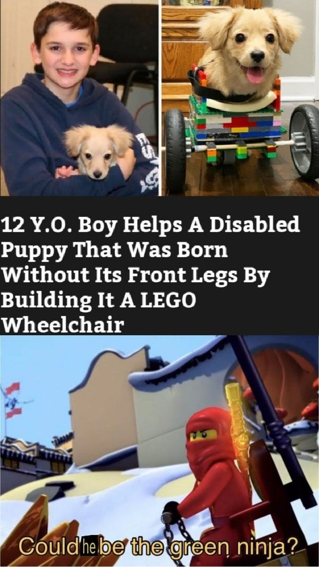 Companion dog - 12 Y.O. Boy Helps A Disabled Puppy That Was Born Without Its Front Legs By Building It A LEGO Wheelchair Could he be the green ninja?