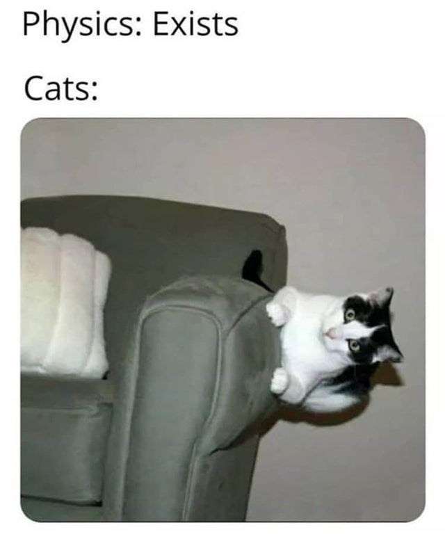 Cat - Physics: Exists Cats: