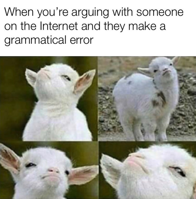 Sheep - When you're arguing with someone on the Internet and they make a grammatical error
