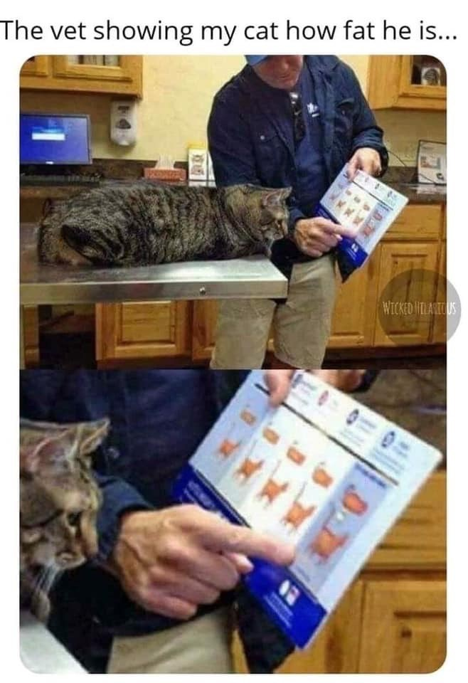 Product - The vet showing my cat how fat he is... WICKED IHTLARTOUS
