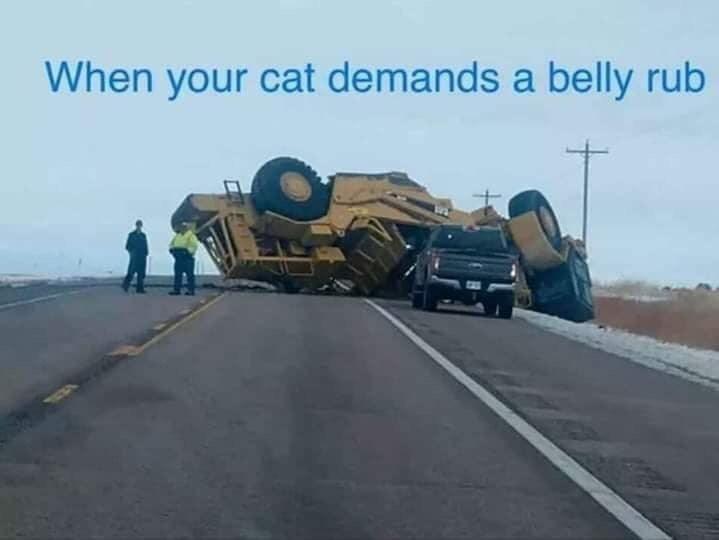 Asphalt - When your cat demands a belly rub