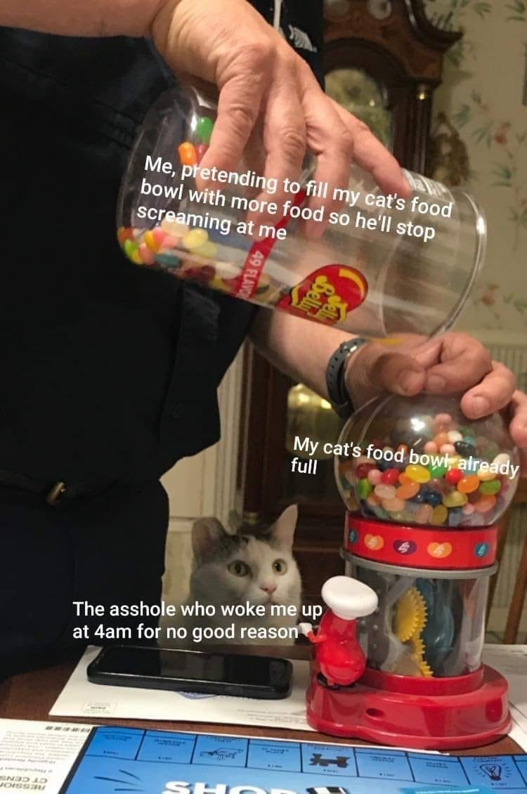 Cat - Me, pretending to fill my cat's food bowl with more food so he'll stop screaming at me My cat's food bowl, already full The asshole who woke me up at 4am for no good reason SHO n CT CENS RESSIOr 49 FLAVOR