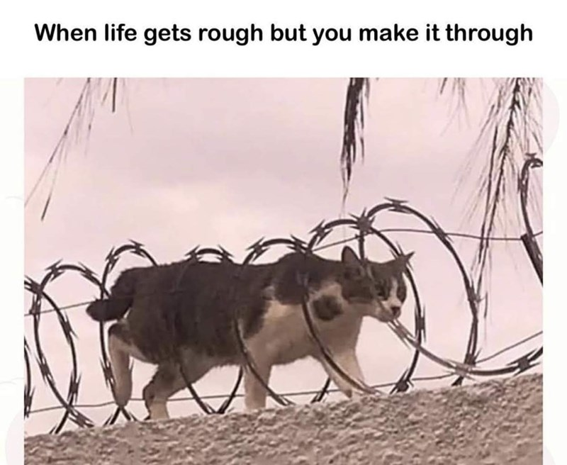 Text - When life gets rough but you make it through
