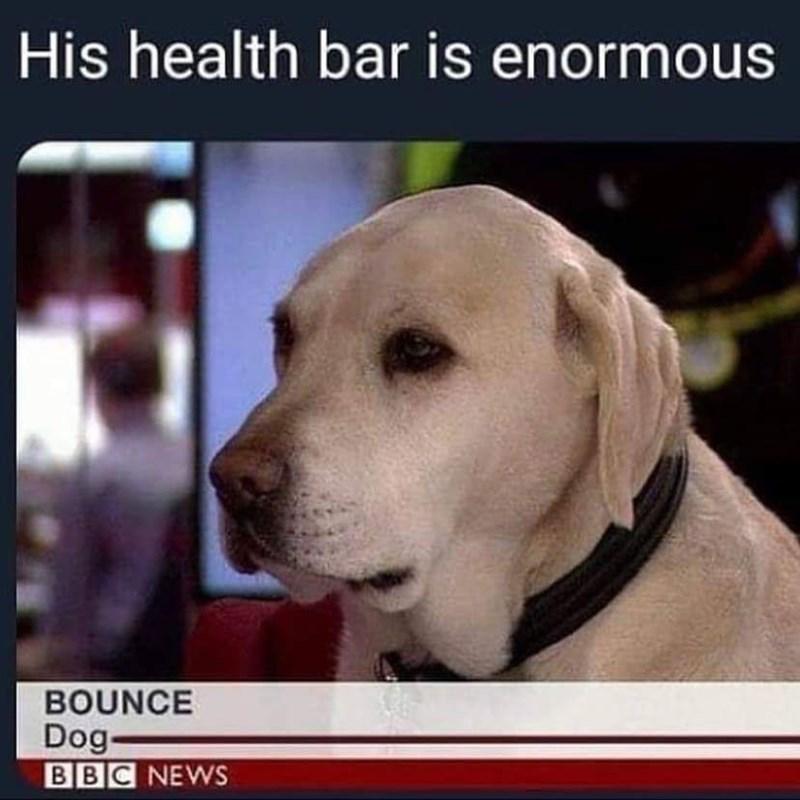 Dog - His health bar is enormous BOUNCE Dog- BBC NEWS