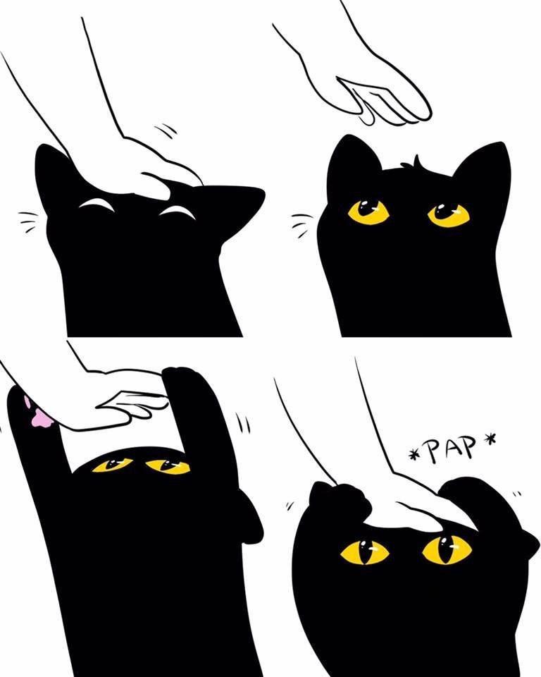 Black cat - * PAP *