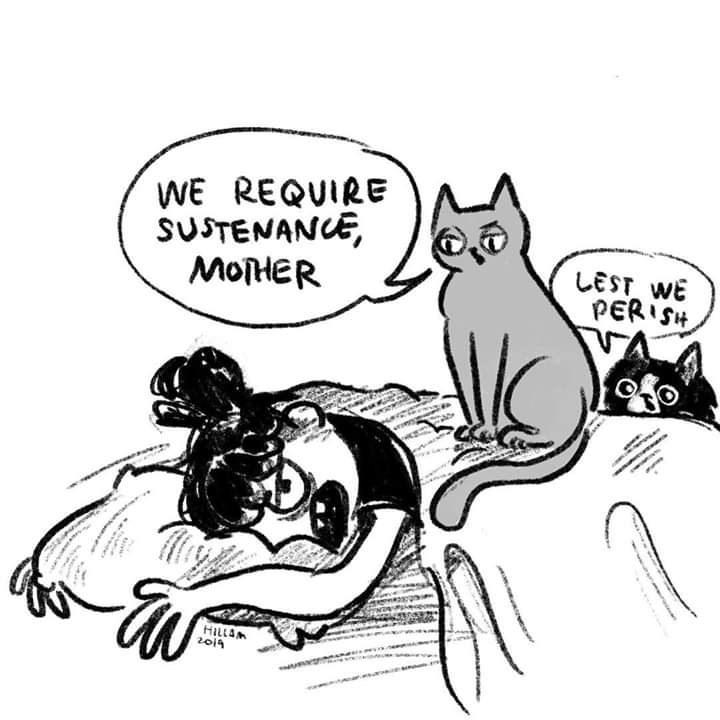 Cartoon - WE REQUIRE SUSTENANCE, MOHER LEST WE PERISH HILLAM 2019