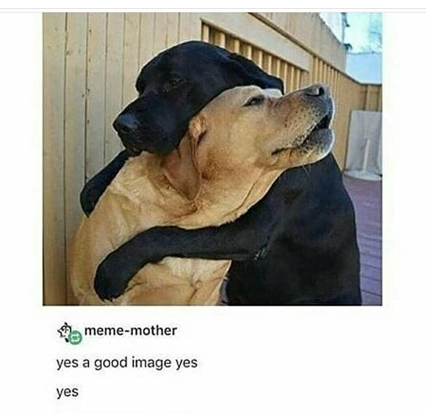 Dog - meme-mother yes a good image yes yes