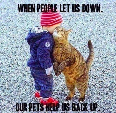 Cat - WHEN PEOPLE LET US DOWN. OUR PETS HELP US BACK UP