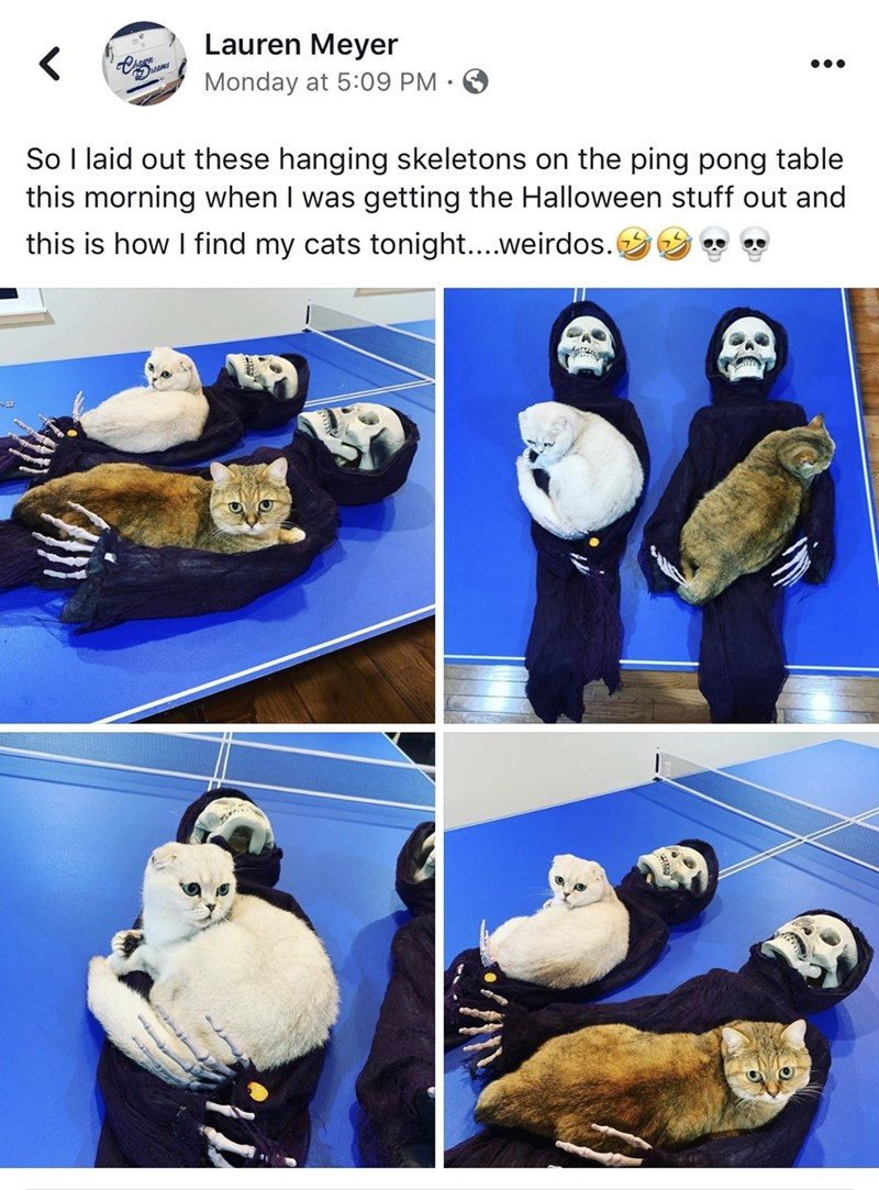 Lauren Meyer Monday at 5:09 PM So I laid out these hanging skeletons on the ping pong table this morning when I was getting the Halloween stuff out and this is how I find my cats tonight....weirdos.