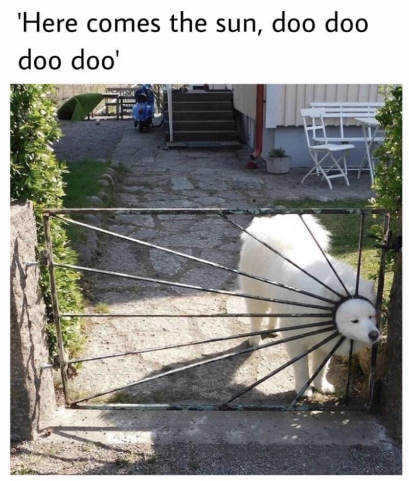 Adaptation - 'Here comes the sun, doo doo doo doo'
