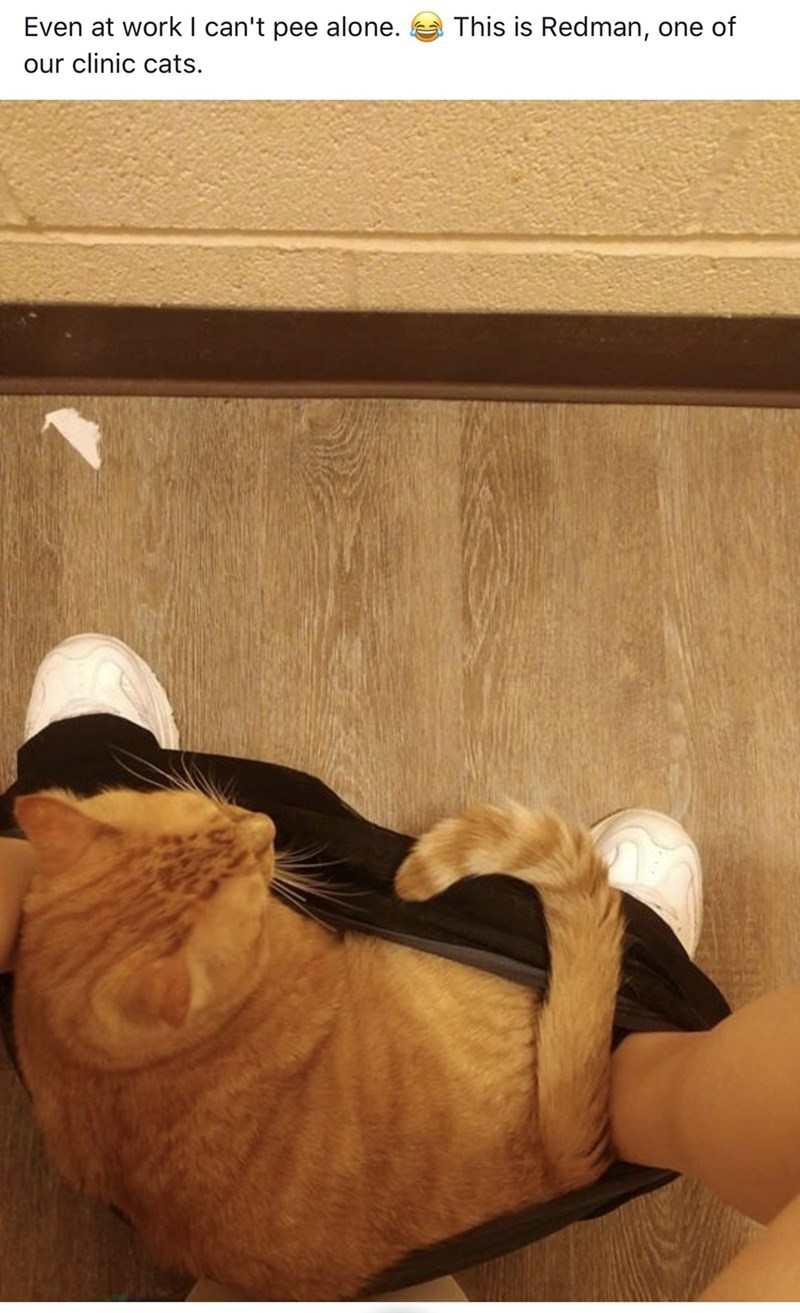 Leg - This is Redman, one of Even at work I can't pee alone. our clinic cats.