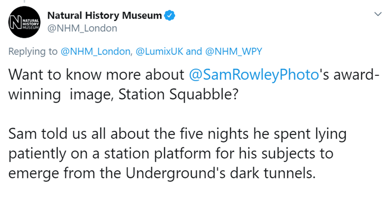 Text - Natural History Museum @NHM_London N: NATURAL HISTORY MUSEUM Replying to @NHM_London, @LumixUK and @NHM_WPY Want to know more about @SamRowleyPhoto's award- winning image, Station Squabble? Sam told us all about the five nights he spent lying patiently on a station platform for his subjects to emerge from the Underground's dark tunnels.
