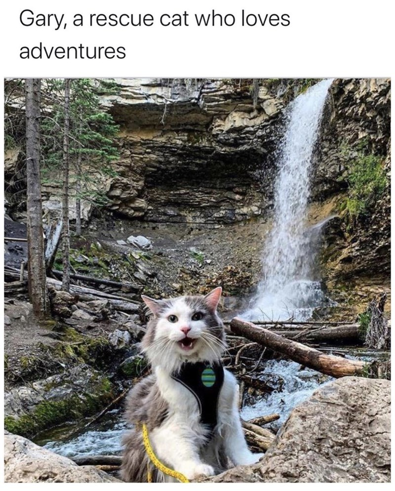 Water resources - Gary, a rescue cat who loves adventures