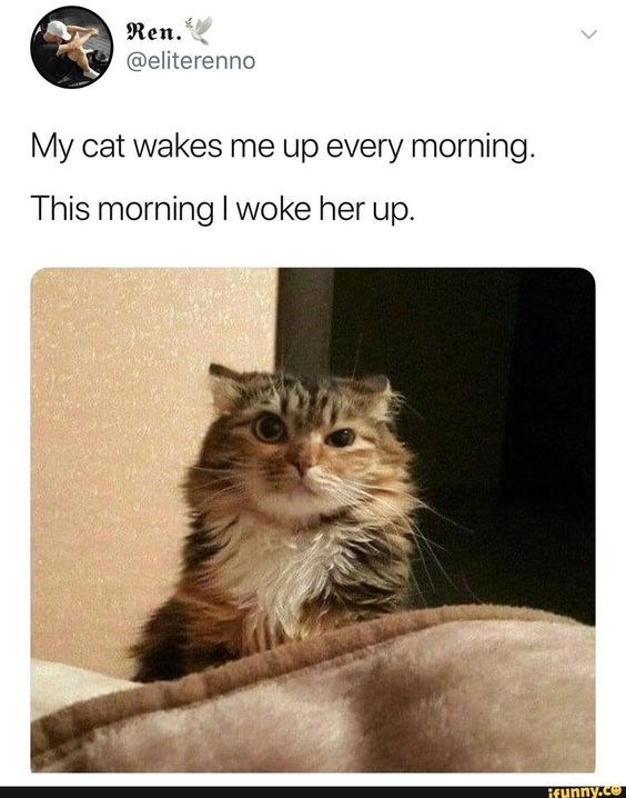 Cat - Ren. @eliterenno My cat wakes me up every morning. This morning I woke her up. ifunny.co