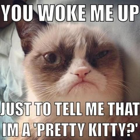 Cat - YOU WOKE ME UP JUST TO TELL ME THAT IMA PRETTY KITTY?""