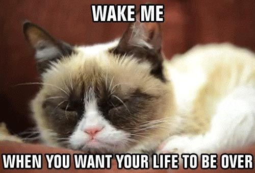 Cat - WAKE ME WHEN YOU WANT YOUR LIFE TO BE OVER