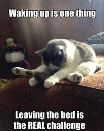 Cat - Waking up is one thing Leaving the bed is the REAL challenge