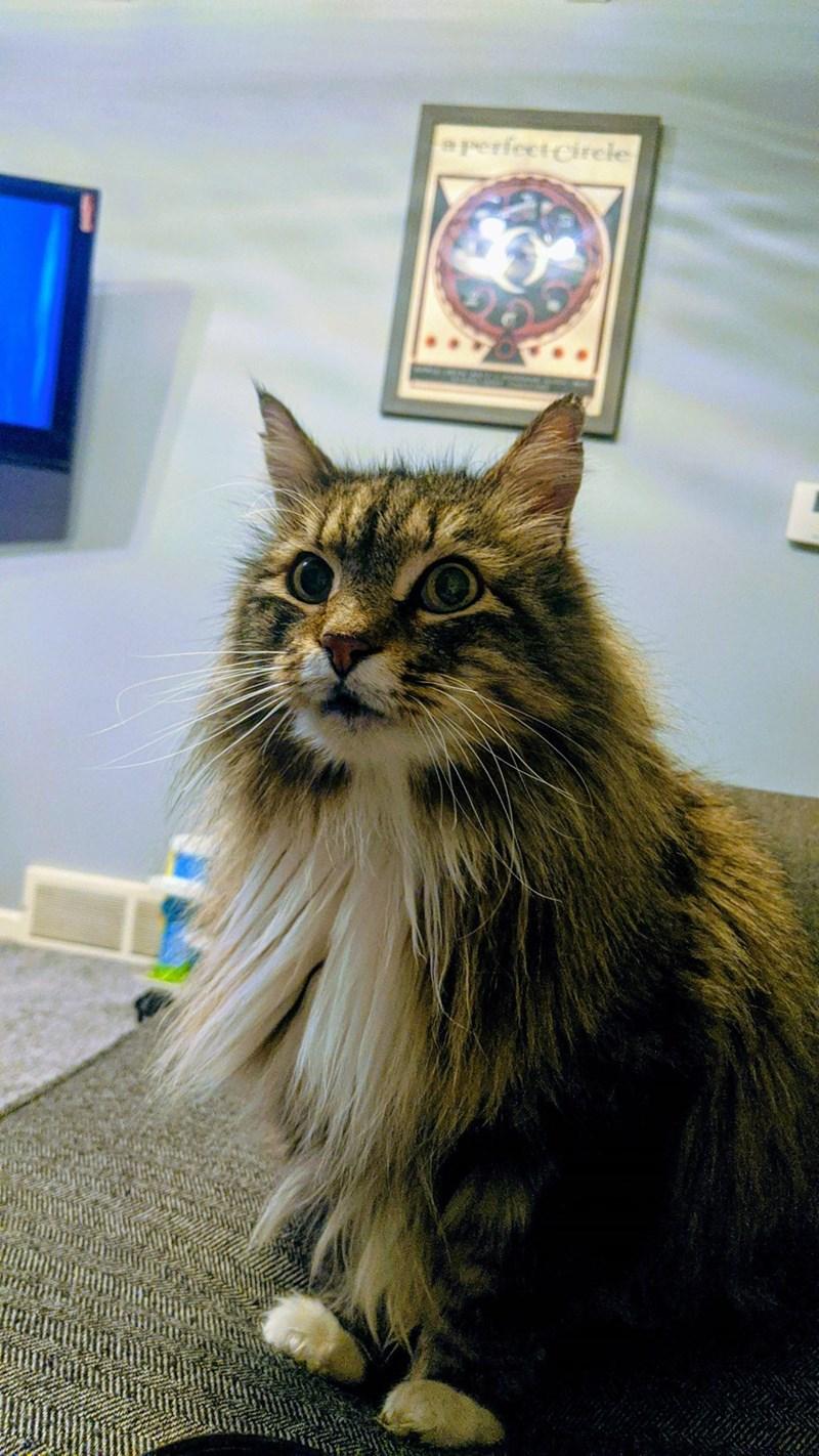 Cat - aperfectCirele