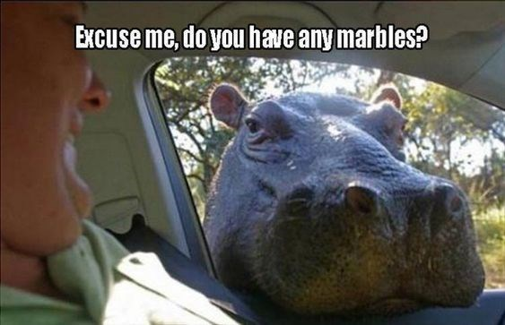Snout - Excuse me, do you have any marbles?