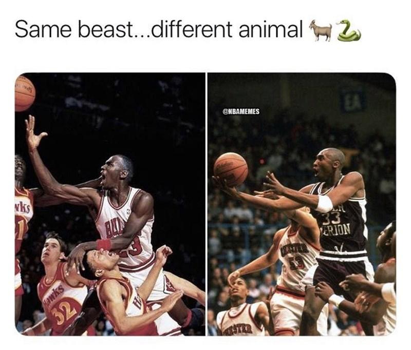 Basketball player - Same beast..different animal 2 @NBAMEMES EA wks 33 ERION awks 32