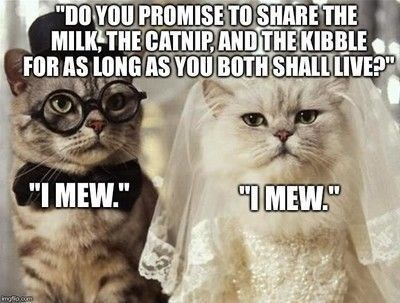 do you promise to share the milk the catnip and the kibble for as long as you both shall live? i mew. two cats getting married grey striped cat wearing a black top hat and a bow tie and rounded glasses and a white cat wearing a white bride veil