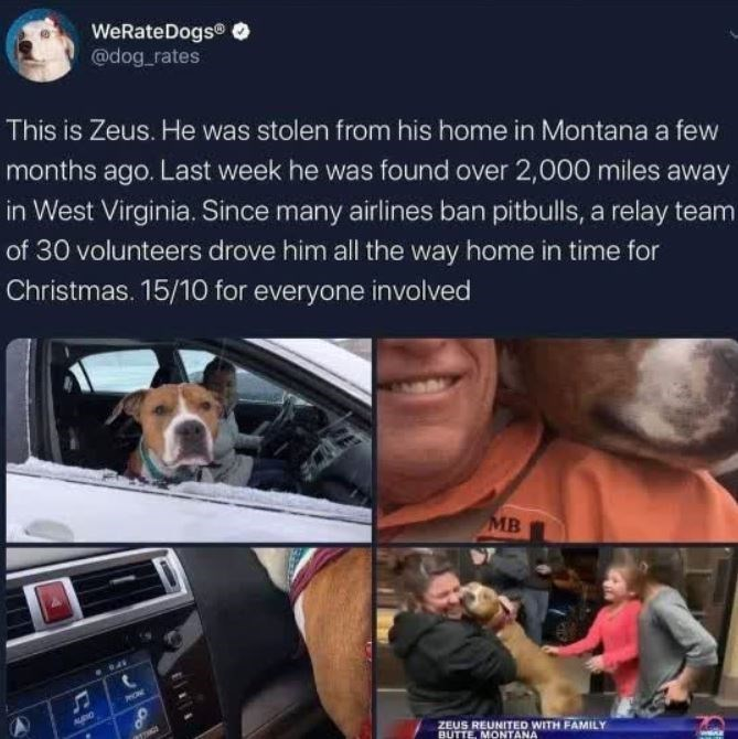 Canidae - WeRateDogs® O @dog_rates This is Zeus. He was stolen from his home in Montana a few months ago. Last week he was found over 2,000 miles away in West Virginia. Since many airlines ban pitbulls, a relay team of 30 volunteers drove him all the way home in time for Christmas. 15/10 for everyone involved MB ONE AURO ZEUS REUNITED WITH FAMILY BUTTE, MONTANA