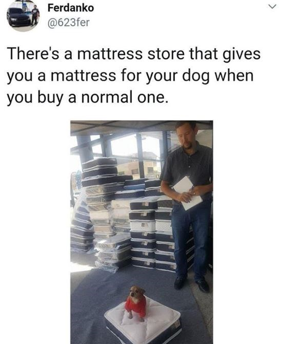 Furniture - Ferdanko @623fer There's a mattress store that gives you a mattress for your dog when you buy a normal one.