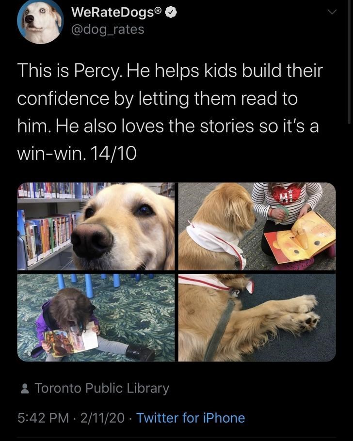 Canidae - WeRateDogs® @dog_rates This is Percy. He helps kids build their confidence by letting them read to him. He also loves the stories so it's a win-win. 14/10 : Toronto Public Library 5:42 PM · 2/11/20 · Twitter for iPhone