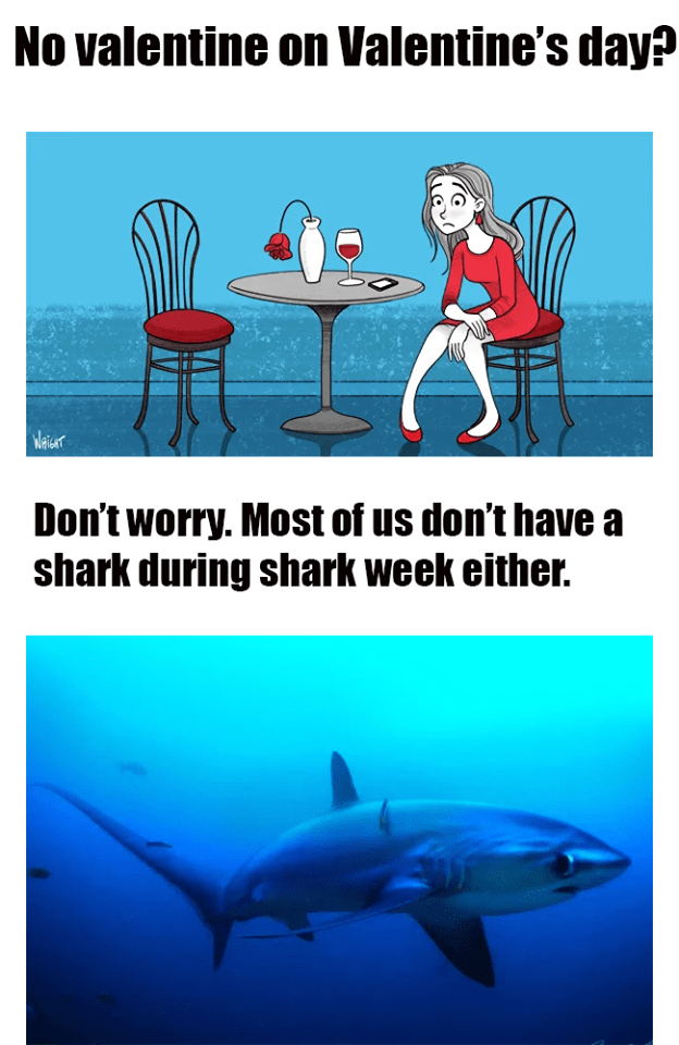 Shark - No valentine on Valentine's day? Wariser Don't worry. Most of us don't have a shark during shark week either.
