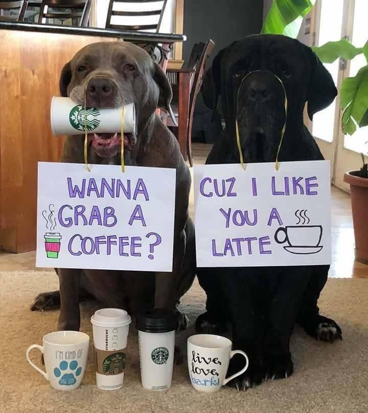Dog - CUZ I LIKE YOU A SS LATTE WANNA GRAB A COFFEE? In KIND OF live love barkl