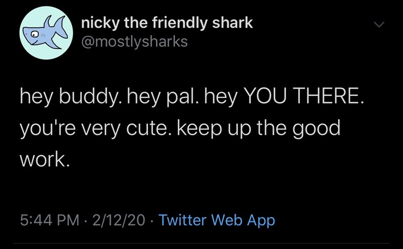 Text - nicky the friendly shark @mostlysharks hey buddy. hey pal. hey YOU THERE. you're very cute. keep up the good work. 5:44 PM · 2/12/20 · Twitter Web App